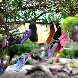 Shoe tree ...  by Desiree Havenga - Artistic Objects Clothing & Accessories