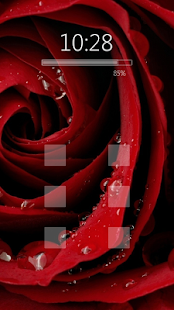 Attractive blooming red roses - screenshot