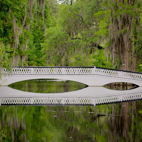 Bridge Over The Swamp by Randell Whitworth - Landscapes Waterscapes ( water, green, trees, bridge, pretty, swamp, relax, tranquil, relaxing, tranquility )