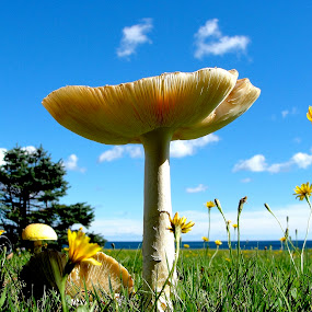 At the Ocean by Of-the-Star Designs - Nature Up Close Mushrooms & Fungi ( yellow mushroom, mushroom, fungi, cape breton )