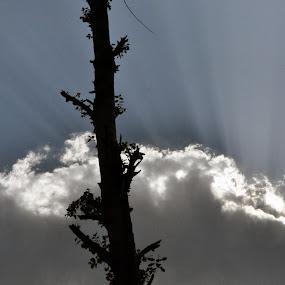 ALONE by Debanjan Goswami - Nature Up Close Trees & Bushes (  )