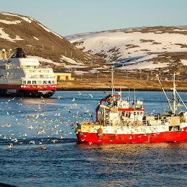 Berlevåg Port by Annette Nordlinder - Transportation Boats ( mountains, snow, seagulls, hurtigruten, arctic, springtime, fishing boat, northern norway,  )