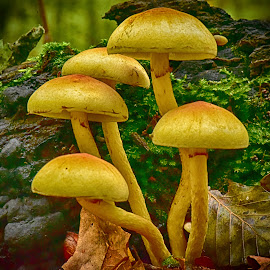 Crowded by Marco Bertamé - Nature Up Close Mushrooms & Fungi ( mushroom, five, autumn, green, fall, moss, forest, yellow, crowded )
