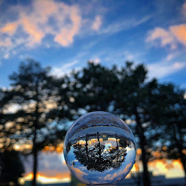perspectives  by Melissa Poling - Artistic Objects Glass ( lensball, tree, perspective, landscapes, photography )