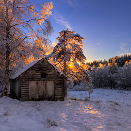 In the woods by Rune Askeland - Landscapes Forests ( osterøy, winter, snow, trees, norge, light, sun, norway )