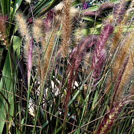 by Denise O'Hern - Nature Up Close Leaves & Grasses
