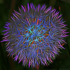 Dandelion Colors by Mill Tal - Digital Art Abstract
