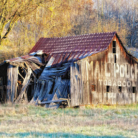 The ol Barn  by Ernie Page - Buildings & Architecture Other Exteriors ( barn, morning light, buildings, architecture, mail pouch barns )
