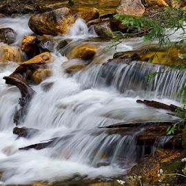 Beaver Creek - Up Close by Marko Ginsberg - Nature Up Close Water ( water, black and white, creek, rocks )