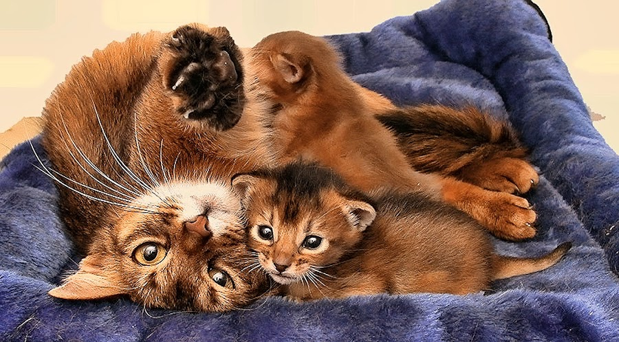 by Rita Bruche - Animals - Cats Kittens (  )