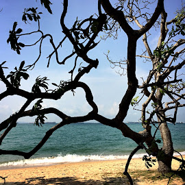 Tree at the beach by Janette Ho - Instagram & Mobile iPhone