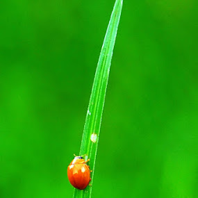 up up... almost there by Mark Louie Meru - Animals Insects & Spiders