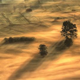 Golden morning by Rado Krasnik - Landscapes Prairies, Meadows & Fields ( trees, marsh, sunrise, morning, landscape, mist,  )
