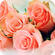 Peach Rose Live Wallpaper