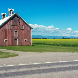 Canola Barn by Mike Lee - Instagram & Mobile Android ( farm, barn, canola, agriculture, architecture, flowers, agricultural )