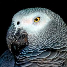 Cute by Asif Bora - Animals Birds