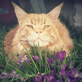 Phoenix by Linda Hogue - Animals - Cats Portraits