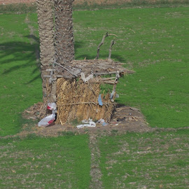 Egyptian farmers hut by Jenny Noraika - Buildings & Architecture Homes ( farmer, straw, hut, nile, egypt )