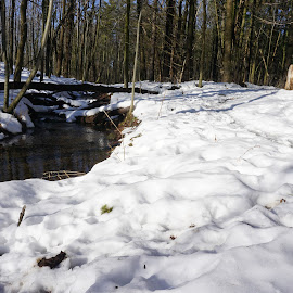 Creek in the Woods by Kathy Kehl - Landscapes Forests ( tree, snow, creek, trees, woods )