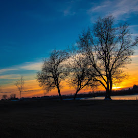 Trees Silhouetted by Chad Roberts - Nature Up Close Trees & Bushes ( water, reflection, sky, winter, sunset, silhouette, sundown, cloud, trees, evening, river )