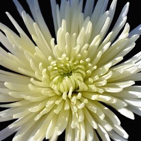 by Rany Haj - Nature Up Close Flowers - 2011-2013