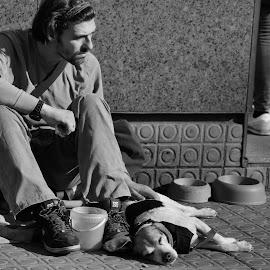 by Marius Rusu - People Street & Candids ( homeless dog friend street  sweet )