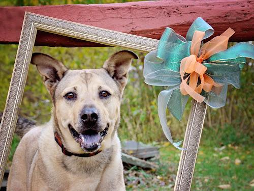 I Was Framed! by Elaine Tweedy - Animals - Dogs Portraits
