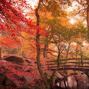 Sleepy Hollow by Stuart Lilley - Landscapes Forests ( wood, bridge, bridges, woods, river,  )