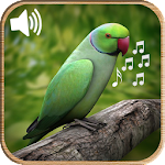 Latest Bird Ringtones 2016 APK