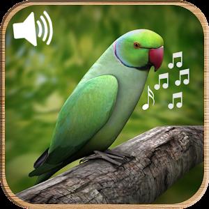 Latest Bird Ringtones 2016 - Android Apps on Google Play