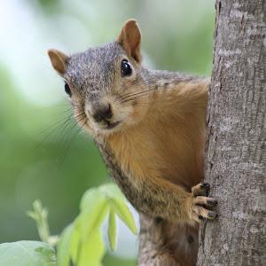Mommy Squirrel.jpg