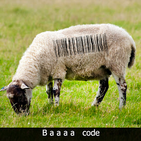 Baaa code by Steven Stamford - Typography Captioned Photos ( silly, humourous, fun image, ovine, sheep. bar code, baaa code, funny, humorous, humor, lamb, fun, scrart,  )