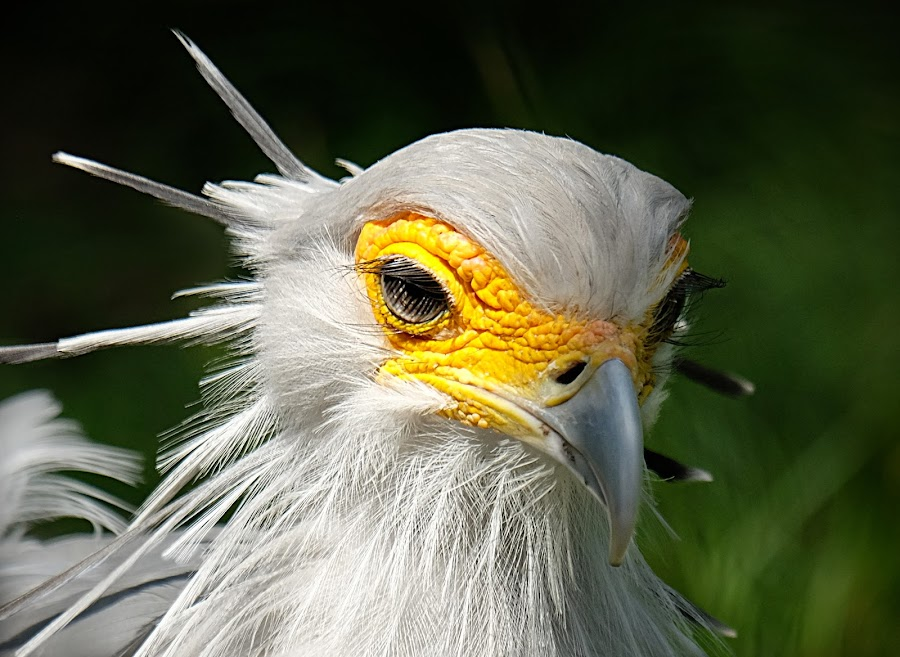 by Shawn Thomas - Animals Birds (  )