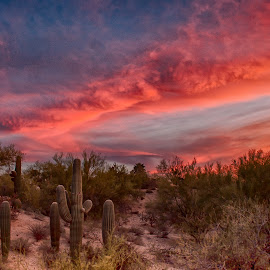 Tucson Tonight by Charlie Alolkoy - Landscapes Deserts ( desert, sunset, arizona, tucson )
