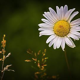 Flower by Dave Lipchen - Digital Art Things ( flower )