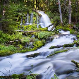 Big Spring Creek Falls by Mats Nordgren - Landscapes Waterscapes ( water, big spring creek falls, creek, waterfall, moss, forest, wet )