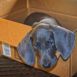 Luca by Jim Antonicello - Animals - Dogs Puppies ( puppy )