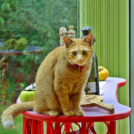Autumn style by Ciprian Apetrei - Animals - Cats Portraits ( cat, autumn, apples, brittany, ginger cat )
