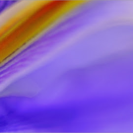 iris abstract by Kittie Groenewald - Abstract Macro ( abstract curves, abstract art, lilacs, flower )