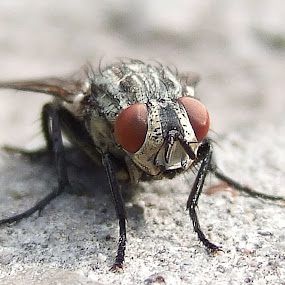 by Zeljko Secujski - Animals Insects & Spiders