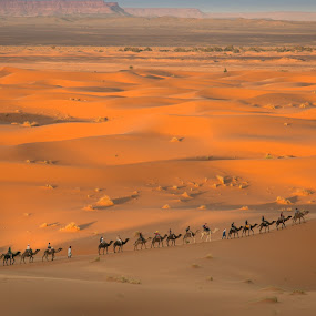 Camel riding in the desert by Natalia Photography - Landscapes Deserts ( discover, africa, explore, canon 70d, riding, canon, adventure, sahara, dunes, panorama, golden hour, camel, sunset, camel riding, morocco, sahara desert, desert, travel, vista, landscape, maroc )