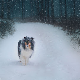 by Niclas Ådemark - Animals - Dogs Running