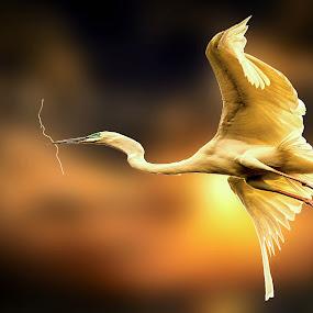 by Dinesh Pandey - Animals Birds (  )