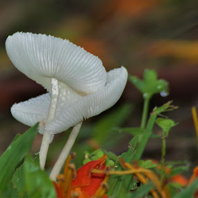 oh so tiny by Carolyn Lawson - Nature Up Close Mushrooms & Fungi