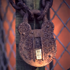 Padlock and Chain by Darrell Evans - Artistic Objects Other Objects ( old, post, lock, equipment, security, padlock, fence, chain, metal, no people, outdoor, locks, closed, locked, rust, hasp, decay,  )