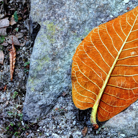 by Subrata Chatterjee - Nature Up Close Leaves & Grasses ( fall leaves on ground, fall leaves )