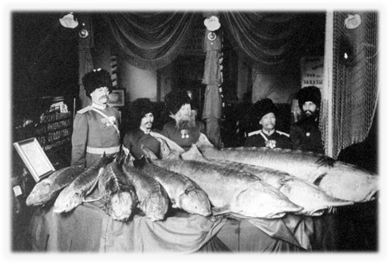 Рыбные богатства Николаевщины в 19 веке