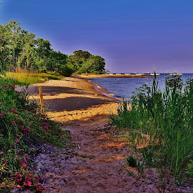 Beverly Triton Beach Scene by Matthew Beziat - Landscapes Beaches ( maryland beaches, beverly triton beach park, anne arundel county, chesapeake bay beaches, maryland, edgewater, chesapeake bay,  )