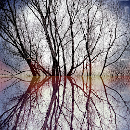 Digref 73 by Michael Moore - Digital Art Things