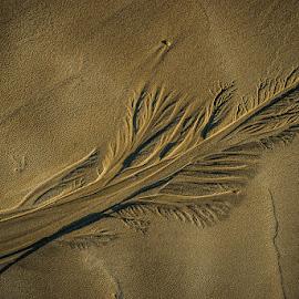Footprints by Joggie van Staden - Nature Up Close Sand ( footprints, sand, patterns, nature, vertical crop, sandy, beach, natural, close up )